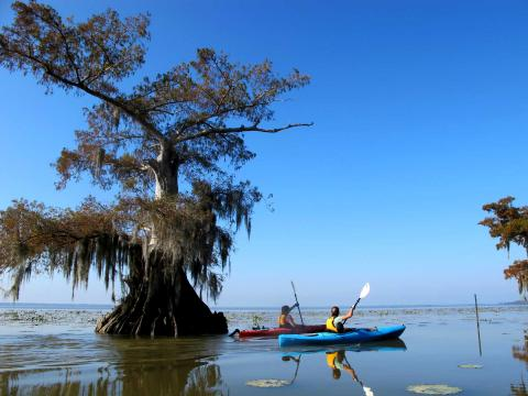 Two kayakers on Lake Martin in Lafayette Louisiana